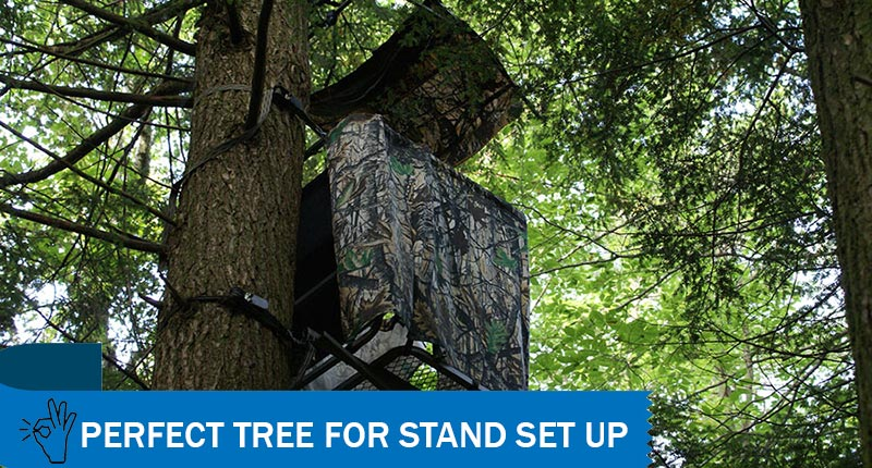 Perfect Tree for a Stand
